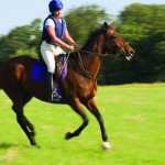 New equine biosecurity guide for horse events