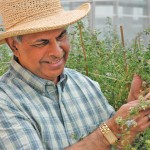 After years of work by Agriculture Canada forage breeder Surya Acharya is nearly ready to hit the market.