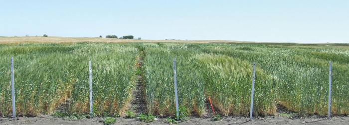 crop research plots