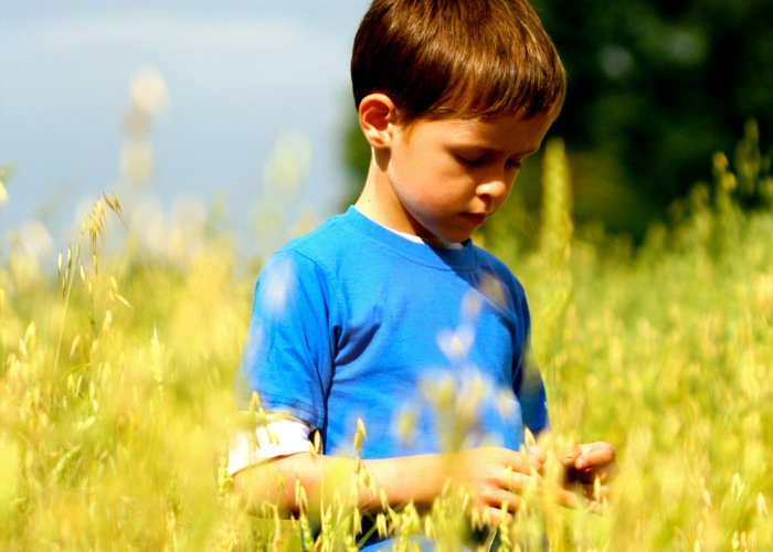 young boy in a canola field