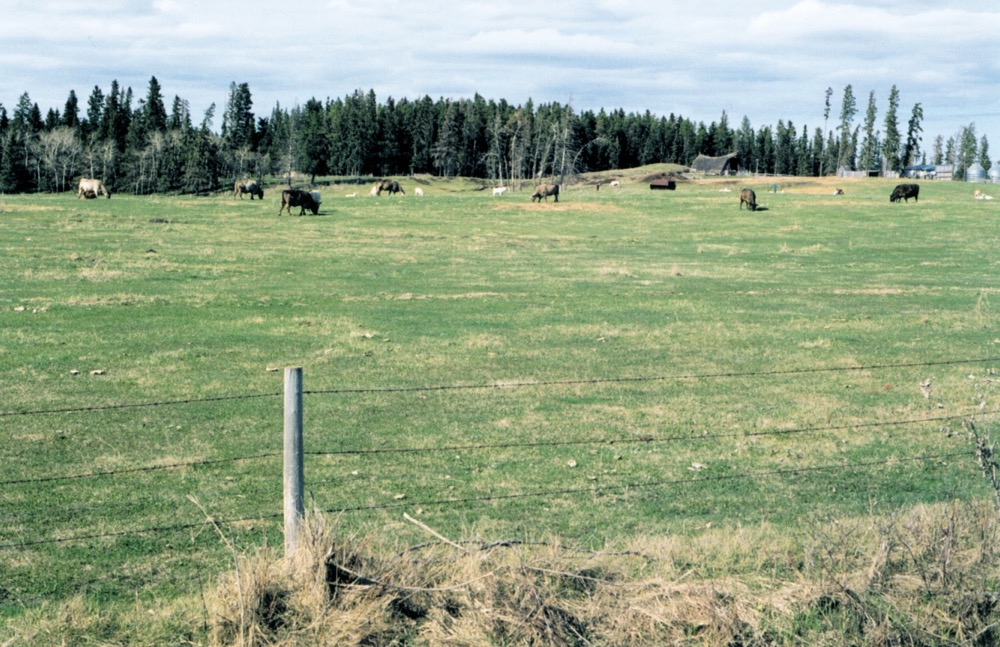 Livestock welfare funding available