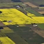 Canola Field aerial