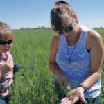 Provincial forage and beef specialist Karin Lindquist (left) and Kaitlin McLachlan, extension co-ordinator with Peace Country Beef and Forage Association, examine some roots during a pasture walk near 