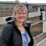 Federal research scientist Karen Schwartzkopf-Genswein found that cattle begin displaying signs of stress after 28 to 30 hours in transport.