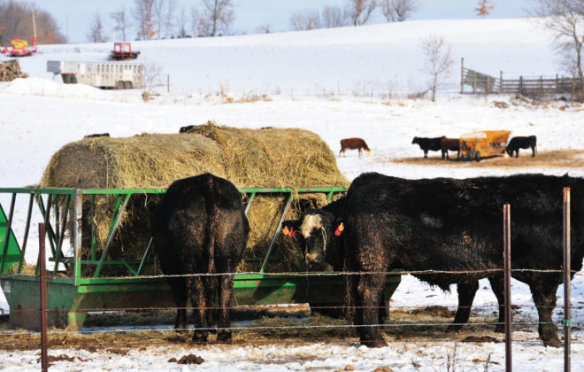 Many of the cattle now under quarantine would have been sold this fall. Now cash-strapped ranchers must feed them at a time 