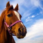 Horse conference offers live presentations