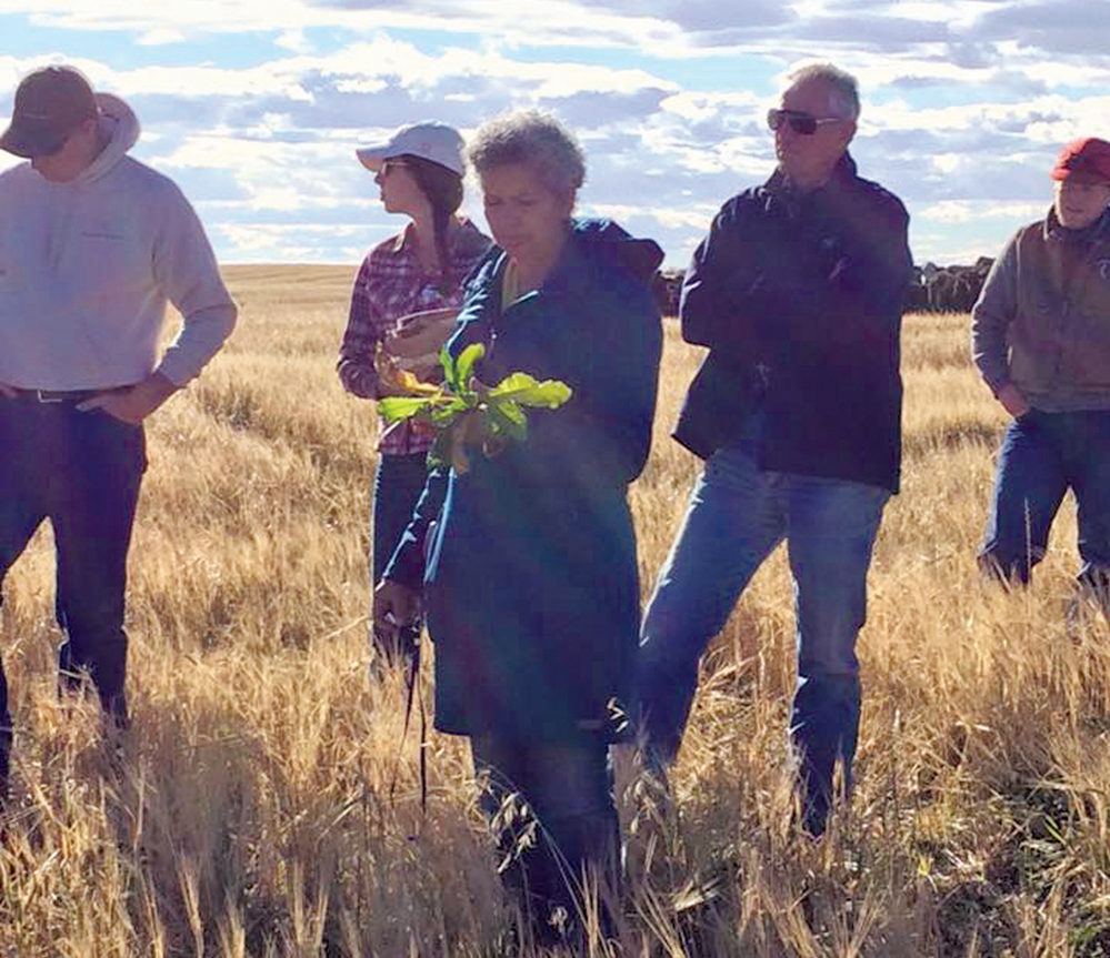 Chinook Applied Research Association has launched a soil health lab to evaluate and improve soil health, said soil health specialist Yamily Zavala at a Foothills Forage and Grazing Association forage tour in mid-October.
