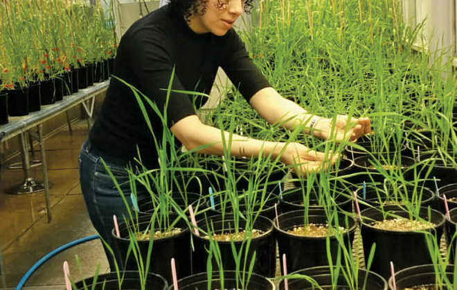 Reem Aboukhaddour is one of four new Ag Canada scientists hired in Alberta this year. Her focus is on diseases such as stripe rust, leaf spot, and fusarium head blight.