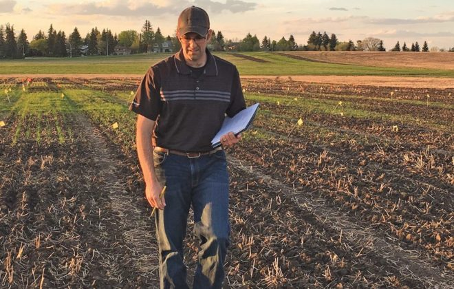 Some Alberta producers may be able to seed their wheat as early as mid-February, but there's still work to be done, says researcher Graham Collier, seen here in test plots seeded 'ultra early.'