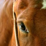 Mandatory equine infectious anemia testing being considered