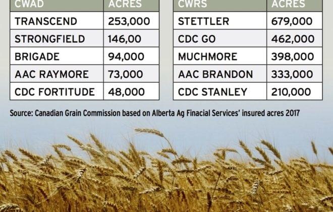 Alberta's most popular wheat acres.