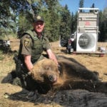 Fish and Wildlife officer Tony Brooks poses with the tranquilized bear that Fish and Wildlife captured on the Korth farm.