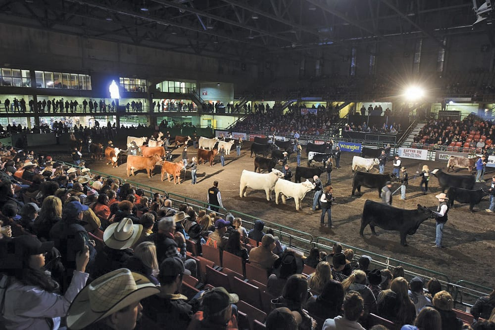 The rodeo is gone but Farmfair riding on