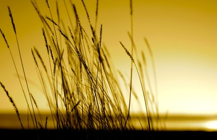 Native grass prairies and sunset