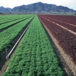 Walmart cited the contamination of romaine lettuce grown in Yuma, Arizona (pictured in this file photo) with E. coli when announcing its leafy greens suppliers will soon have to participate in a blockchain system. 