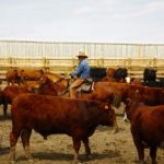 Canadians don't necessarily need to know about how to raise cattle, but they do need to have trust in beef, says one industry representative.