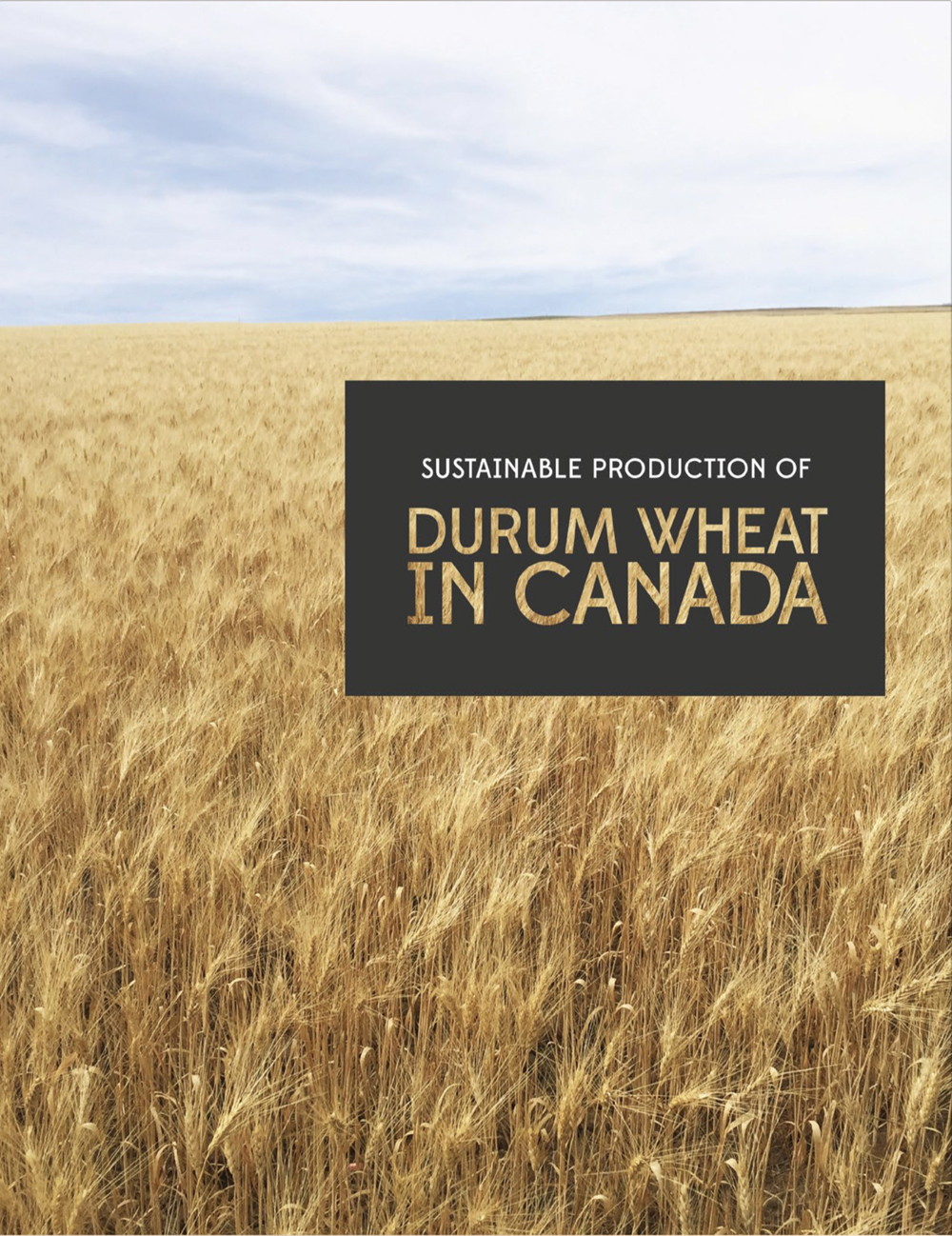 Get the lowdown on growing and selling durum