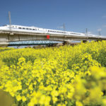 A high-speed bullet train travels past a rapeseed field in China's Jiangsu province last month. The country has greatly expanded production of the oilseed, as well as soybeans, but still needs to import millions of tonnes of vegetable oil annually to meet its needs.