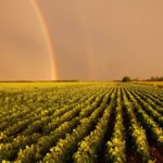 A double rainbow over a Manitoba soybean field. (ImagineGolf/iStock/Getty Images)