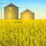 A working group is looking at opportunities to sell canola to new markets in light of China's recent export ban on Canadian canola.
