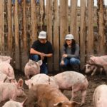 Millennial couple takes outdoor hog farming to the next level