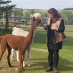 Geri Wayslow has been breeding alpacas on her farm near Ranfurly for the past 15 years.