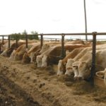 Livestock feed webinar series underway