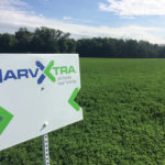 HarvXtra alfalfa with Roundup Ready technology is gaining ground in Eastern Canada, but there are no plans to bring it west yet.