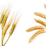 Wheat and barley groups eye merger