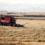 Alberta farmers grapple with a miserable harvest