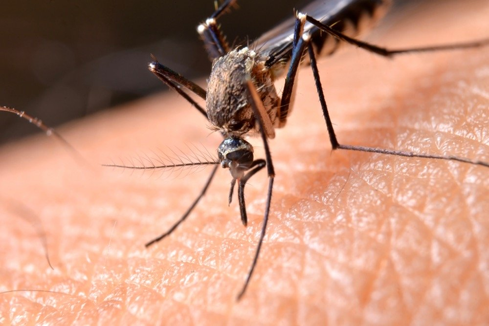 Mosquito control would be one of the few uses still allowed for chlorpyrifos under a proposal from Health Canada's PMRA. (Tskstock/iStock/Getty Images)