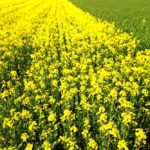 Crop variety reports now available