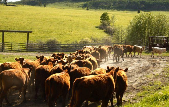 Beef research mentorship program still going strong
