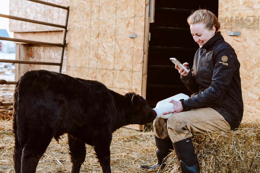 Hershey, a bottle-fed calf, has become a regular on the virtual farm tours that Charlotte Wasylik began making last month.