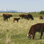 Pasture care in four words: Balance, distribute, rest and litter