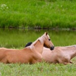Savvy ways to wisely direct dollars in horse ownership