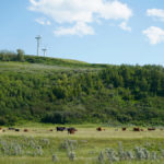 Taking a fresh look at your land, cattle and grazing system