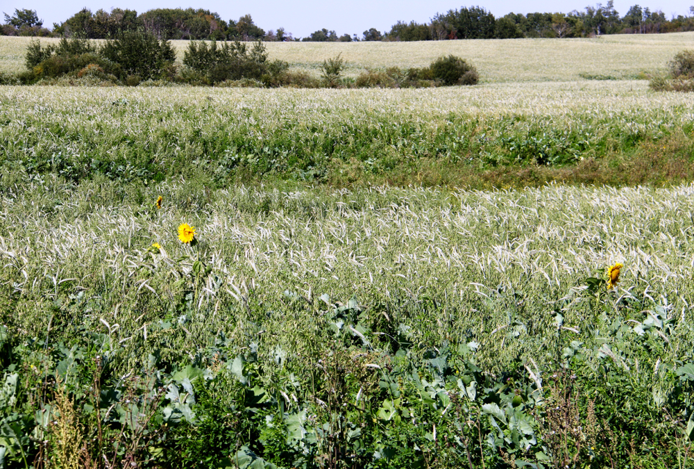 Forage mixes generally include species from four different categories — warm-season broadleaf plants and grasses along with cool-season broadleaf plants and grasses.