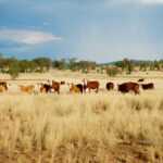 Beef checkoff dollars fund 29 projects