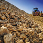 Alberta sugar beet growers seeing turnaround
