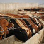 (Photo courtesy Canada Beef Inc.)