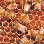 Beekeepers get increased support