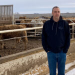 The cattle backlog is easing, but feedlots are still hurting