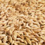 Barley. (Photo courtesy Canada Beef Inc.)