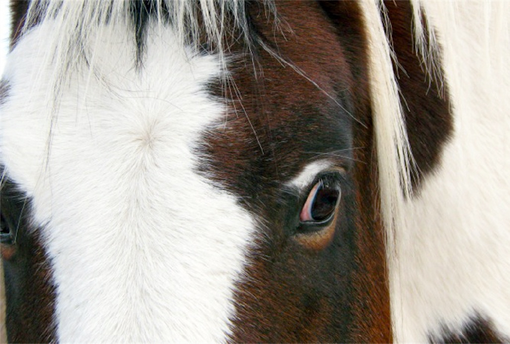 The decision to end a horse's life is often an agonizing process