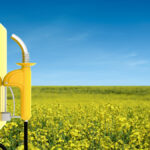 Going green could be golden for canola growers