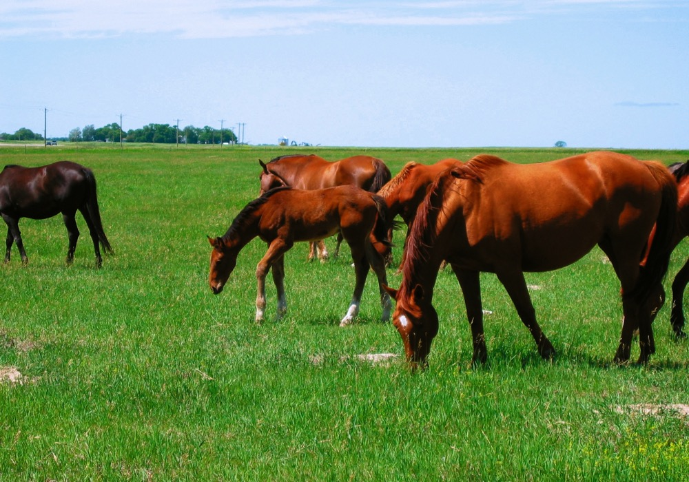 There are several keys to getting a yearling on the proper path